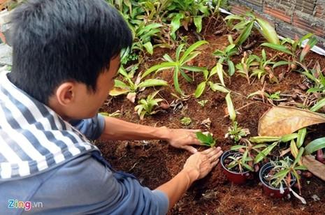 Tận thấy thú chơi 'cây ăn thịt' ở Sài Gòn - ảnh 6