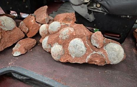 Trung Quốc: Phát hiện hàng chục quả trứng khủng long dưới nền đường - ảnh 3