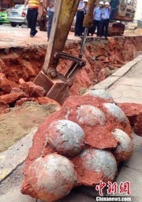 Trung Quốc: Phát hiện hàng chục quả trứng khủng long dưới nền đường - ảnh 4
