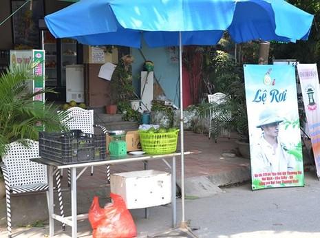 Lệ Rơi bán ổi ở Hà Nội sau những ngày rơi lệ ở showbiz - ảnh 8