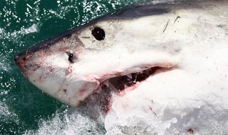 """Thoát chết khỏi hàm cá mập nhờ đòn """"nhất dương chỉ"""" - ảnh 1"""