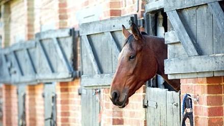 Báo động ngựa bị lạm dụng tình dục - ảnh 1