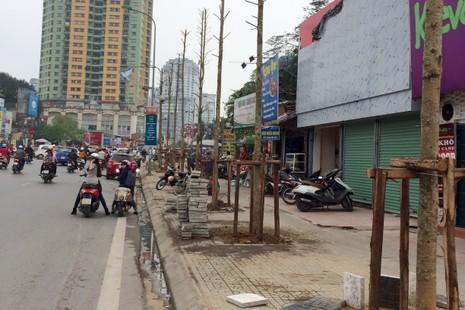 Chủ tịch Hà Nội yêu cầu cử người đi nước ngoài học trồng cây - ảnh 1
