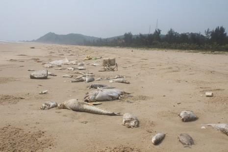 Các tỉnh hỗ trợ gấp gạo cho ngư dân vùng biển - ảnh 1
