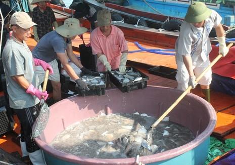 Ngư dân Quảng Bình vui vì bán được hải sản, tàu thuyền tấp nập ra khơi - ảnh 5
