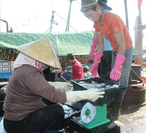 Ngư dân Quảng Bình vui vì bán được hải sản, tàu thuyền tấp nập ra khơi - ảnh 6