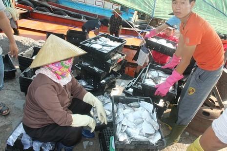 Ngư dân Quảng Bình vui vì bán được hải sản, tàu thuyền tấp nập ra khơi - ảnh 7