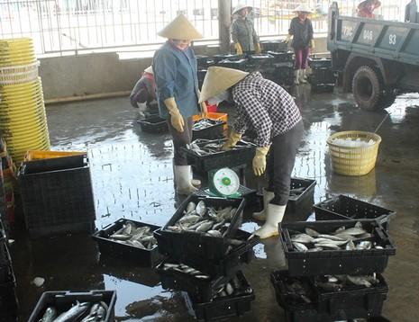 Ngư dân Quảng Bình vui vì bán được hải sản, tàu thuyền tấp nập ra khơi - ảnh 2