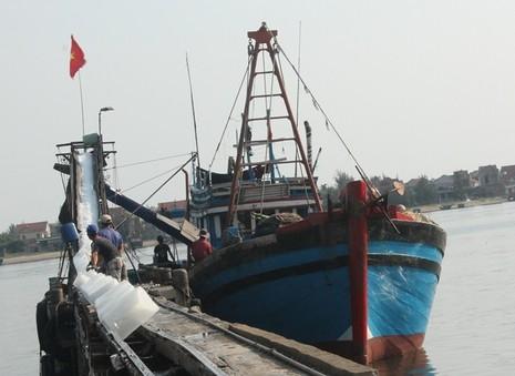 Ngư dân Quảng Bình vui vì bán được hải sản, tàu thuyền tấp nập ra khơi - ảnh 8