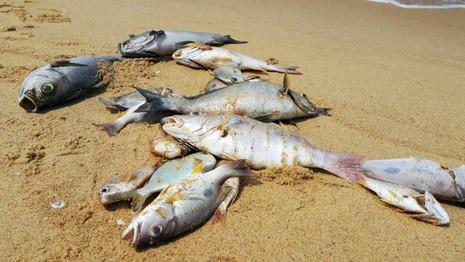 Quảng Trị xin hỗ trợ cho người dân vùng ven biển - ảnh 1