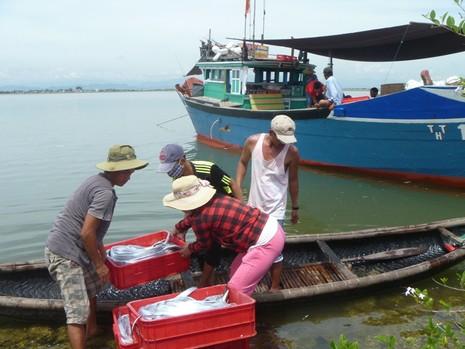 Tuyển chọn 1.300 ngư dân đi Hàn Quốc - ảnh 1