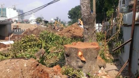 Hà Nội chặt cây xanh để thi công công trình - ảnh 1