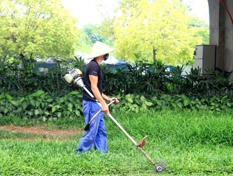 Cỏ mọc um tùm sau khi Hà Nội dừng chi tiền tỉ cho việc... cắt cỏ - ảnh 11