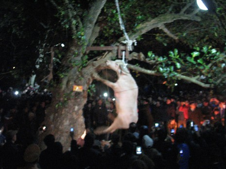 Clip treo trâu đến chết ở lễ hội là hình ảnh cũ - ảnh 1