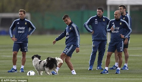 'Cầu thủ' 4 chân thay thế Messi ở đội tuyển Argentina - ảnh 1