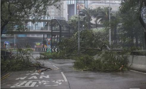 Cãy ngã đổ đầy đường phố Hong Kong vì bãi Mangkhut. Ảnh: SCMP
