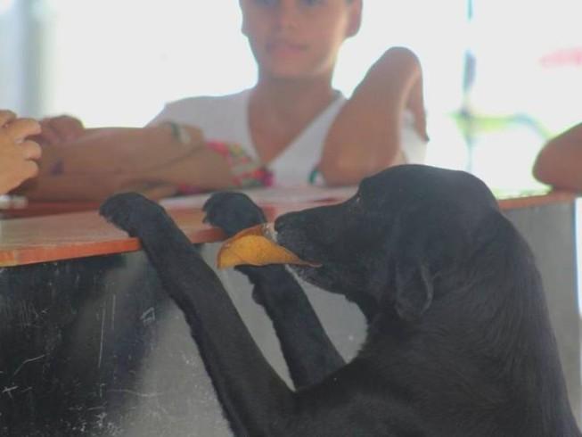 Chú chó thông minh mang 'tiền lá cây' đổi bánh quy mỗi ngày