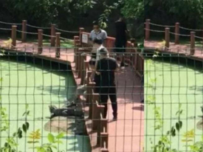 Du khách Trung Quốc hành hạ cá sấu để... chụp ảnh