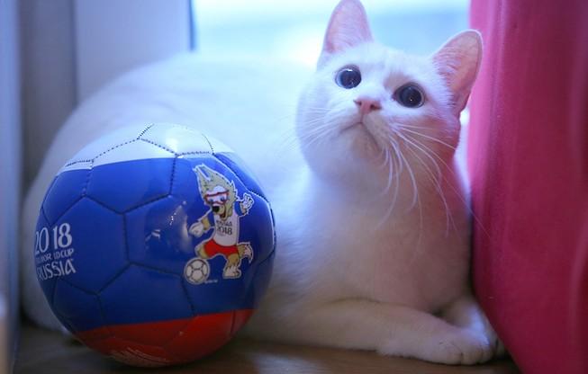 """Nga trình làng mèo """"tiên tri"""" Achilles ở World cup 2018"""
