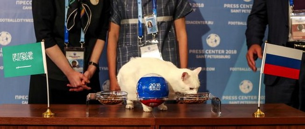 Mèo tiên tri Achilles đã chọn Nga