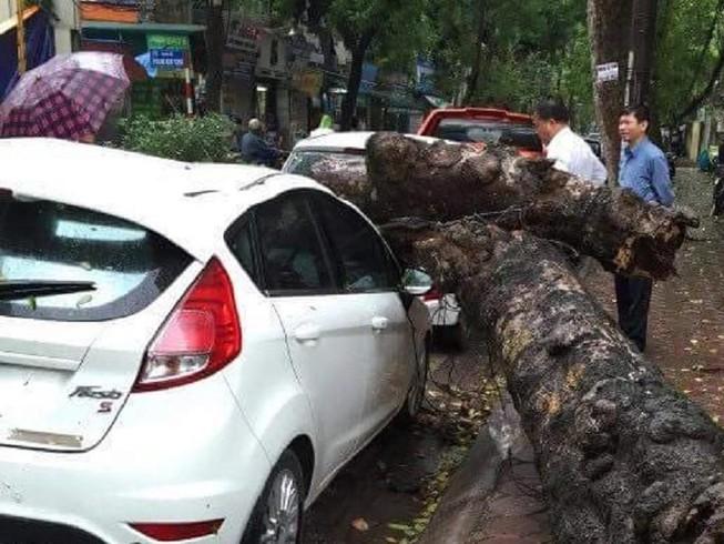Cây xanh đổ trong mưa, đè ô tô tại Hà Nội