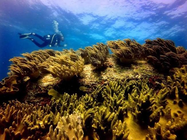 Bình Thuận kiến nghị không nhận chìm 4,5 triệu m3 bùn, cát