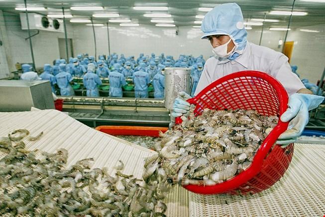 'Thương lái Trung Quốc xúi dân bỏ rau câu vào tôm'