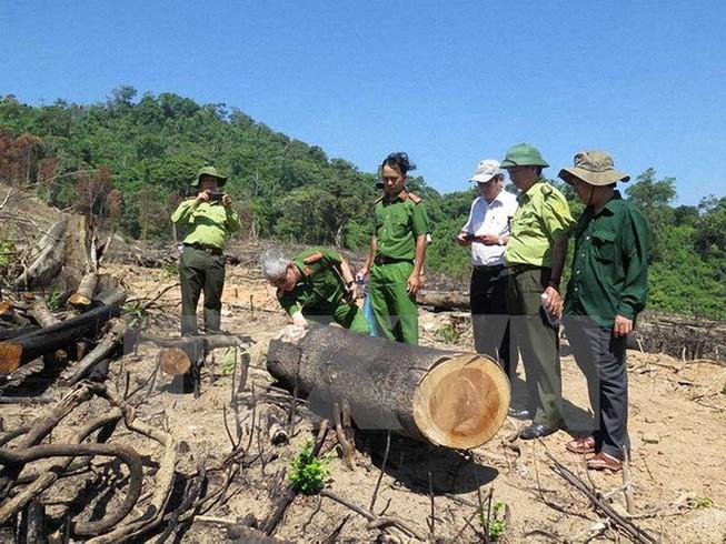 Thủ tướng yêu cầu điều tra vụ phá rừng ở Bình Định