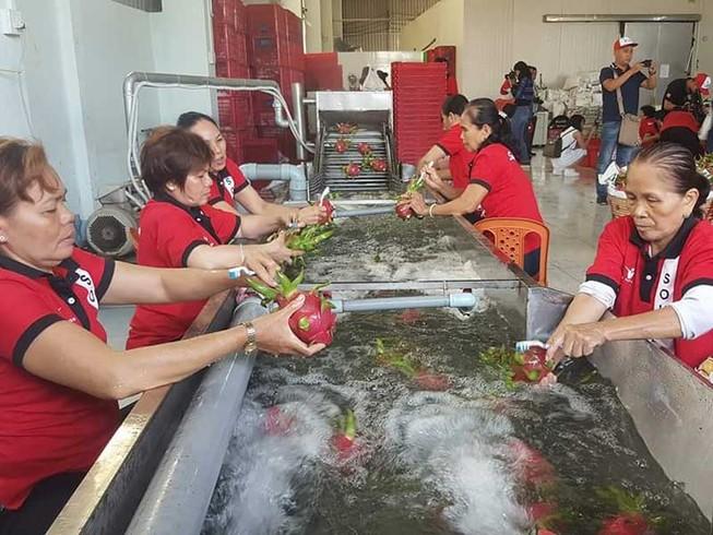 Trung Quốc truy 'lý lịch' gạo, chuối, xoài... Việt Nam