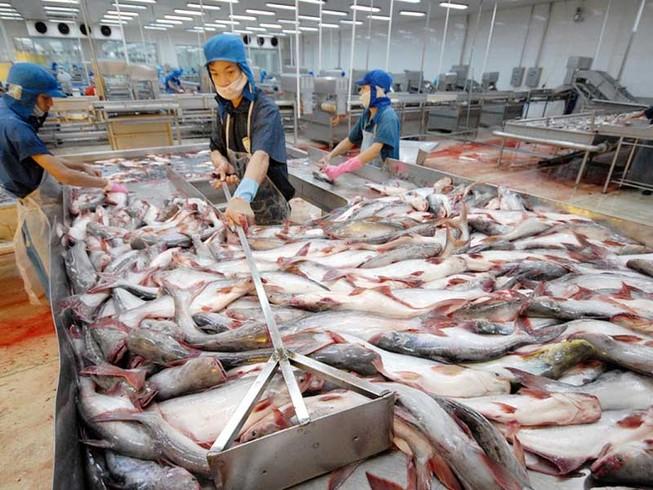 'Vua cá tra' Hùng Vương lao đao vì thua lỗ