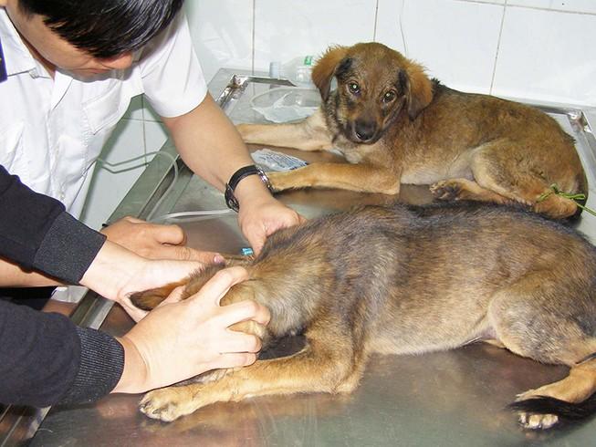 Cảnh giác tử vong vì chó dại cắn
