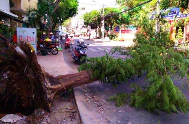 Cây ngã bật gốc do thi công vỉa hè ở Sài Gòn