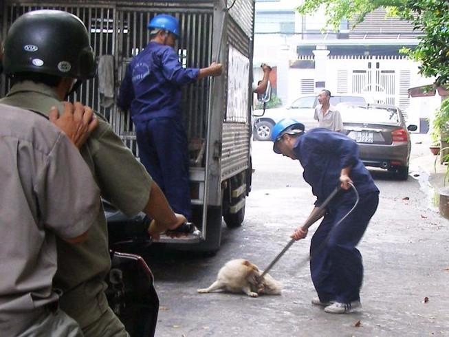 """""""Chó bệnh nặng, tôi thả ra đường để các anh đến bắt"""""""