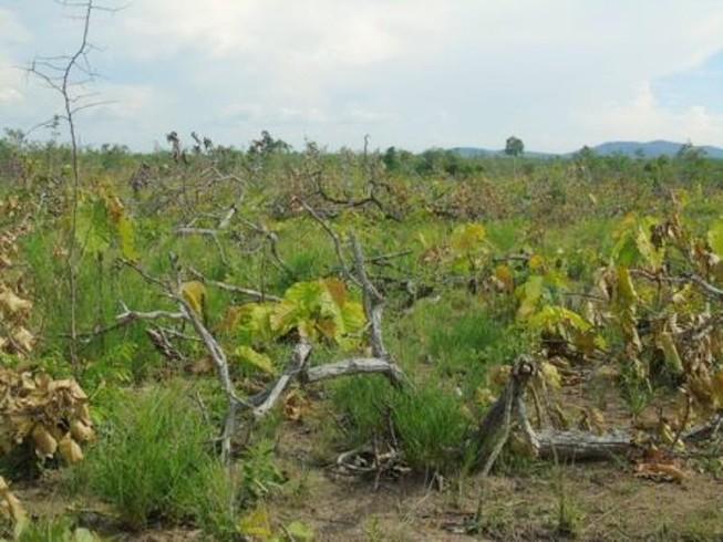 Phát hiện 18 ha rừng sát biên giới bị cắt hạ
