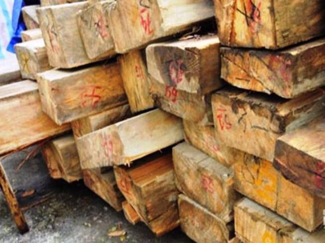 Mất chức vì để chặt phá 36 cây sa mu dầu