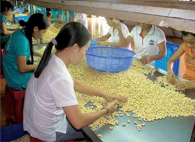 Hiện nay nhiều doanh nghiệp Việt đang xuất khẩu hạt điều sang châu Phi- Ảnh minh họa