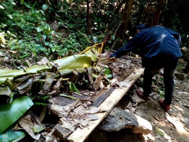 Quảng Nam yêu cầu điều tra rừng phòng hộ bị phá