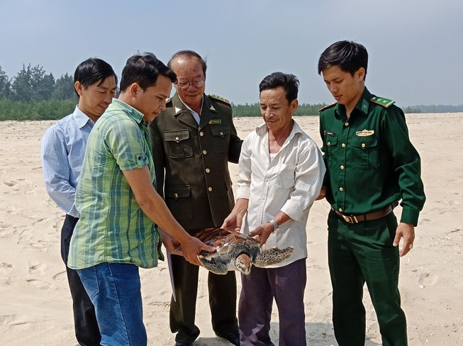 Chú rùa biển nặng 8 kg lạc vào phá Tam Giang