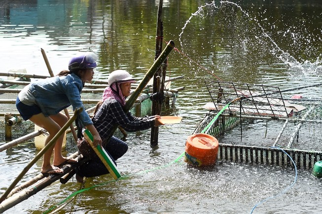 Người dân gạt nước mắt cứu cá lồng trên sông Bồ