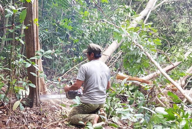 Phó thủ tướng yêu cầu báo cáo vụ phá rừng nuôi bò