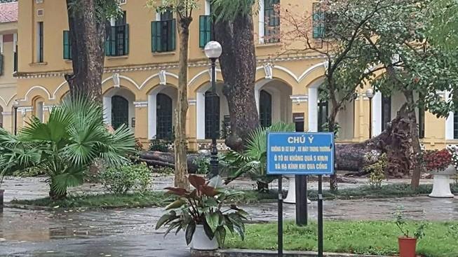 Chỉ đạo nóng sau vụ cây đổ khiến 4 học sinh bị thương