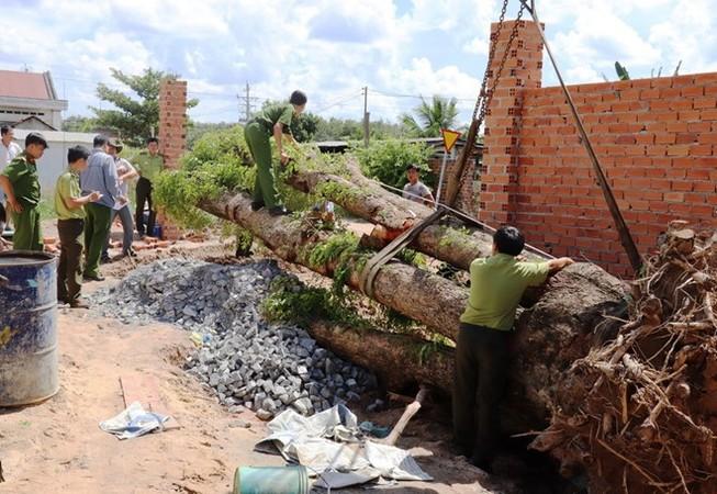 Vụ trộm cây giáng hương 100 tuổi gây xôn xao dư luận