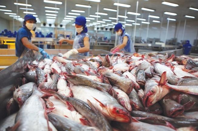 Đề nghị Trung Quốc phối hợp siết chất lượng cá tra