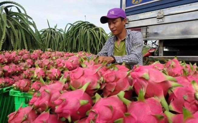 'Giải mã' việc Trung Quốc đột ngột ngưng mua thanh long VN