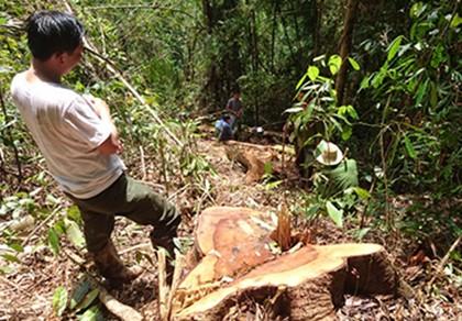 Khởi tố vụ án phá rừng tại hồ thủy điện Đồng Nai 5