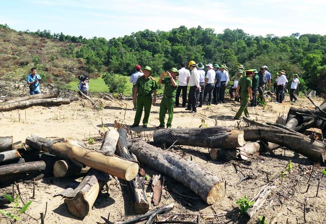 Khởi tố vụ án phá trắng 21 ha rừng phòng hộ ở Bình Định