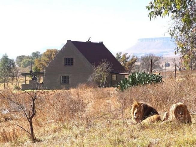 Trả tiền để sống chung với 77 con sư tử