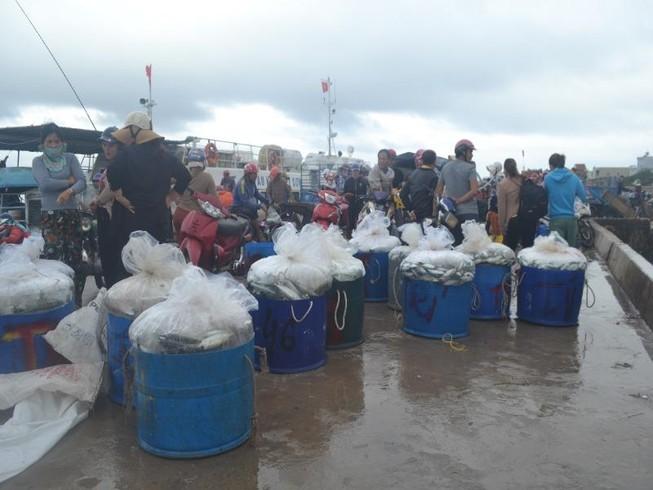 Ngư dân Lý Sơn trúng mùa cá bánh lái
