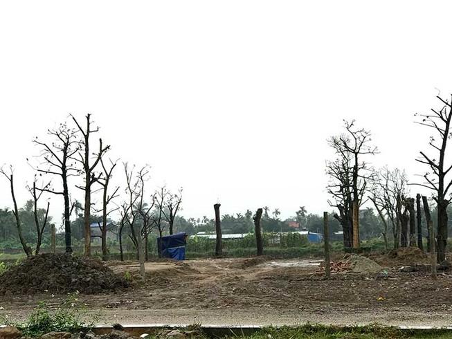Hải Phòng: Đua nhau san lấp đất nông nghiệp ven đường