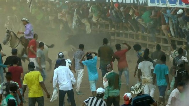 Bò tót 'nổi điên' tấn công người, làm loạn lễ hội đấu bò